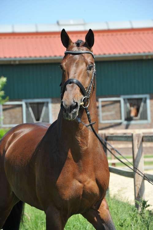Corrado Portrait 05