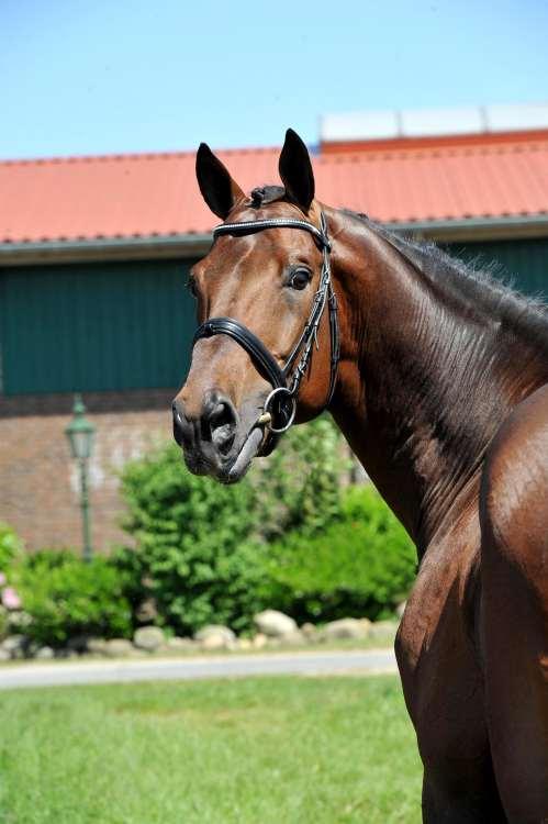 Corrado Portrait 06